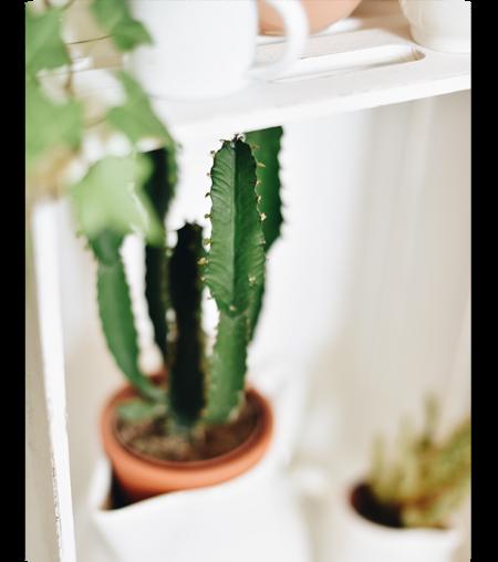 theme-1-cactus-header